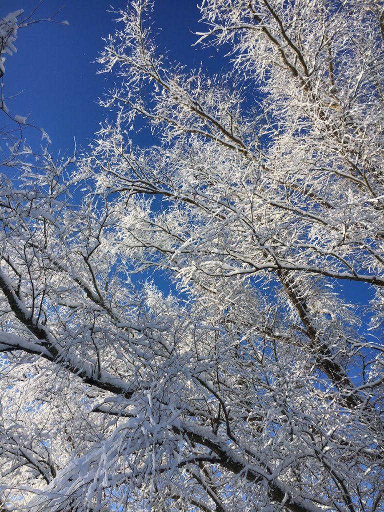 schneebedeckte Weidenbäume