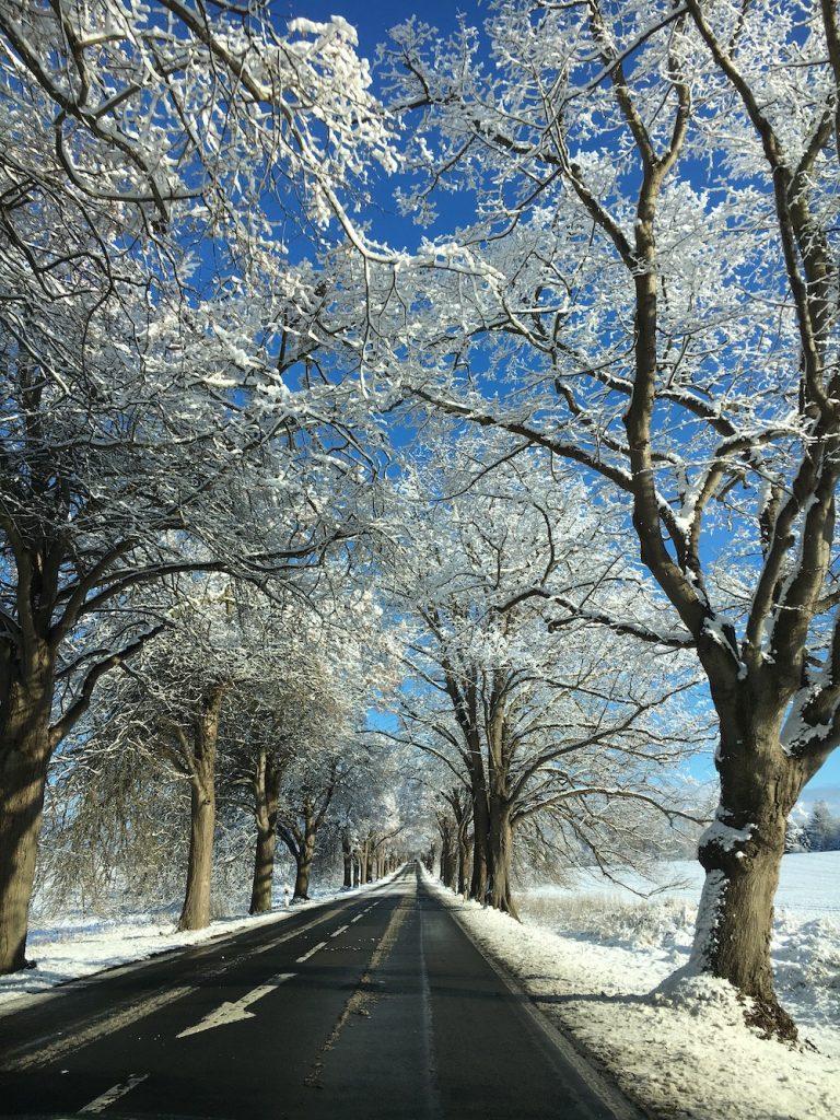 Alleenstraße Rügen im Winter